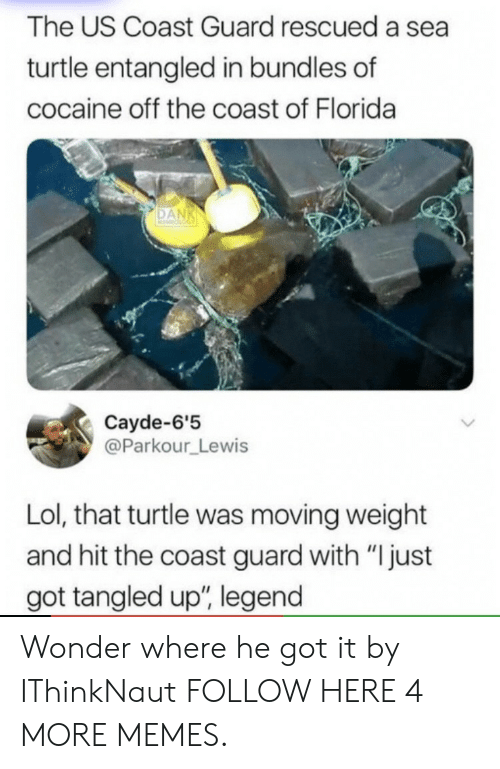 """A Sea: The US Coast Guard rescued a sea  turtle entangled in bundles of  cocaine off the coast of Florida  Cayde-6'5  @Parkour Lewis  Lol, that turtle was moving weight  and hit the coast guard with """"Ijust  got tangled up, legend Wonder where he got it by IThinkNaut FOLLOW HERE 4 MORE MEMES."""