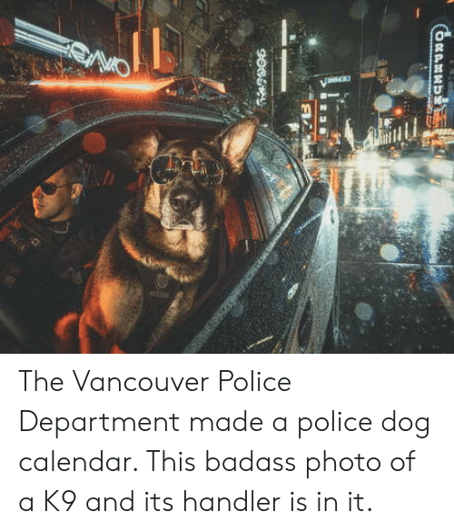 police dog: The Vancouver Police Department made a police dog calendar. This badass photo of a K9 and its handler is in it.