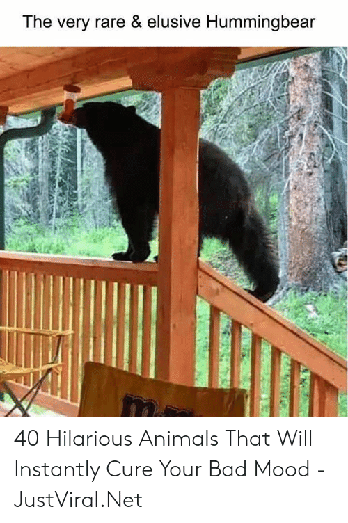 Hilarious Animals: The very rare & elusive Hummingbear 40 Hilarious Animals That Will Instantly Cure Your Bad Mood - JustViral.Net
