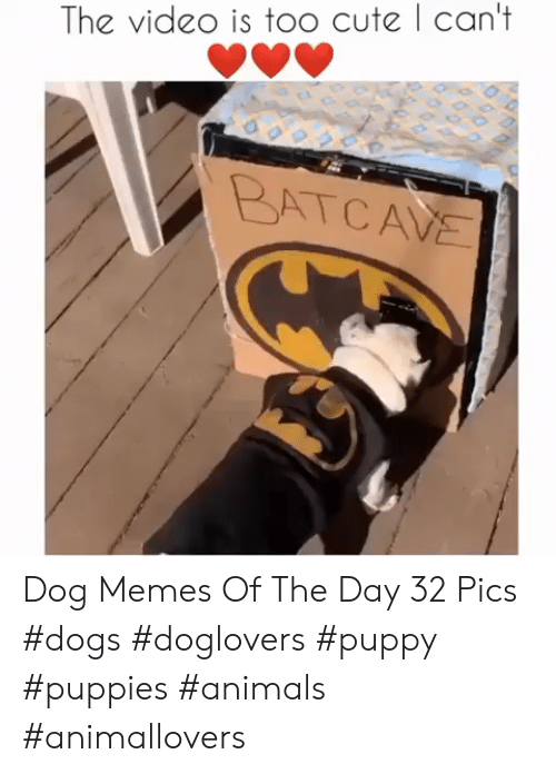 too cute: The vide0 is too cute | can't  BATCAVE Dog Memes Of The Day 32 Pics #dogs #doglovers #puppy #puppies #animals #animallovers