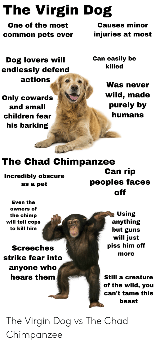 Lovers Will: The Virgin Dog  One of the most  Causes minor  injuries at most  common pets ever  Can easily be  Dog lovers will  endlessly defend  killed  actions  Was never  wild, made  purely by  Only cowards  and small  humans  children fear  his barking  The Chad Chimpanzee  Can rip  Incredibly obscure  as a pet  peoples faces  off  Even the  owners of  Using  anything  but guns  will just  the chimp  will tell cops  to kill him  piss him off  Screeches  more  strike fear into  anyone who  hears them  Still a creature  of the wild, you  can't tame this  beast The Virgin Dog vs The Chad Chimpanzee