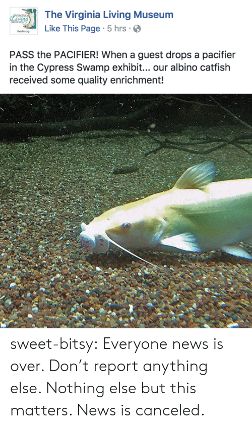 Catfished, News, and Tumblr: The Virginia Living Museum  Like This Page 5 hrs.  PASS the PACIFIER! When a guest drops a pacifier  in the Cypress Swamp exhibit... our albino catfish  received some quality enrichment! sweet-bitsy:  Everyone news is over. Don't report anything else. Nothing else but this matters. News is canceled.