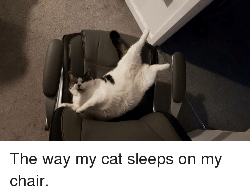 The Way My Cat Sleeps On My Chair Chair Meme On Ballmemescom