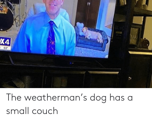 Couch: The weatherman's dog has a small couch