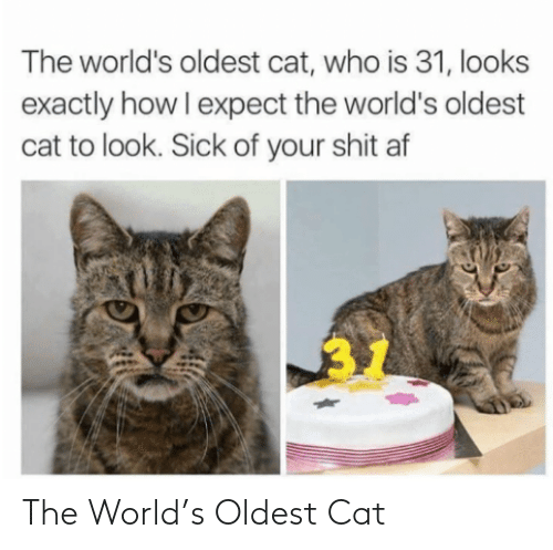 Oldest: The World's Oldest Cat