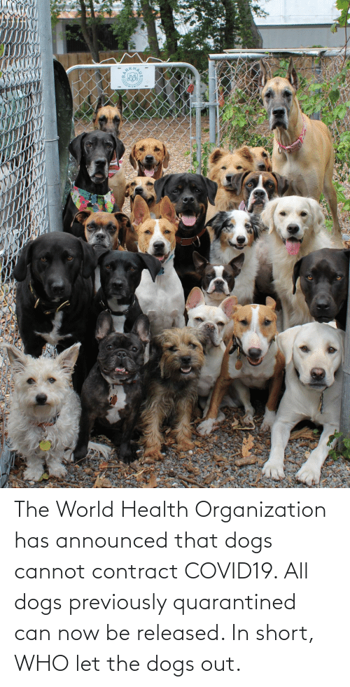 health: The World Health Organization has announced that dogs cannot contract COVID19. All dogs previously quarantined can now be released. In short, WHO let the dogs out.