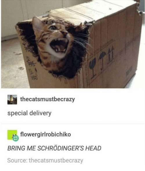 Head, Source, and Delivery: thecatsmustbecrazy  special delivery  flowergirlrobichiko  BRING ME SCHRÖDINGER'S HEAD  Source: thecatsmustbecrazy  eoe