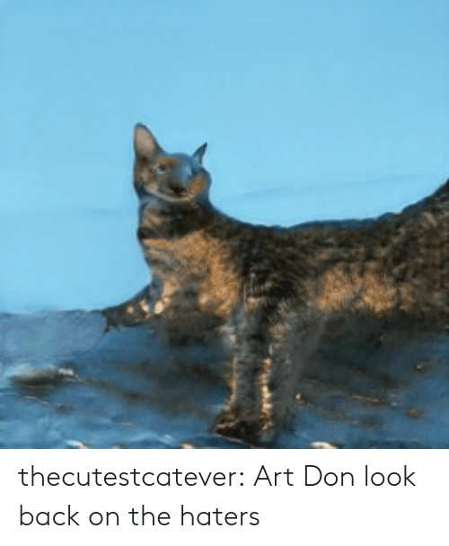 Tumblr, Blog, and Back: thecutestcatever:  Art   Don look back on the haters