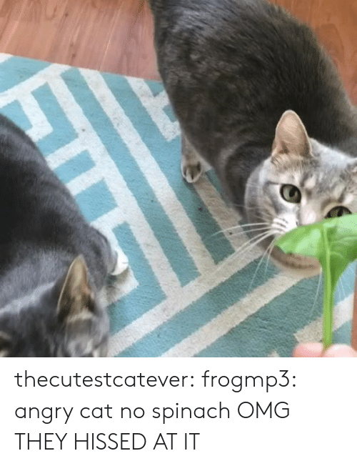 Omg, Tumblr, and Blog: thecutestcatever: frogmp3: angry cat no spinach  OMG THEY HISSED AT IT