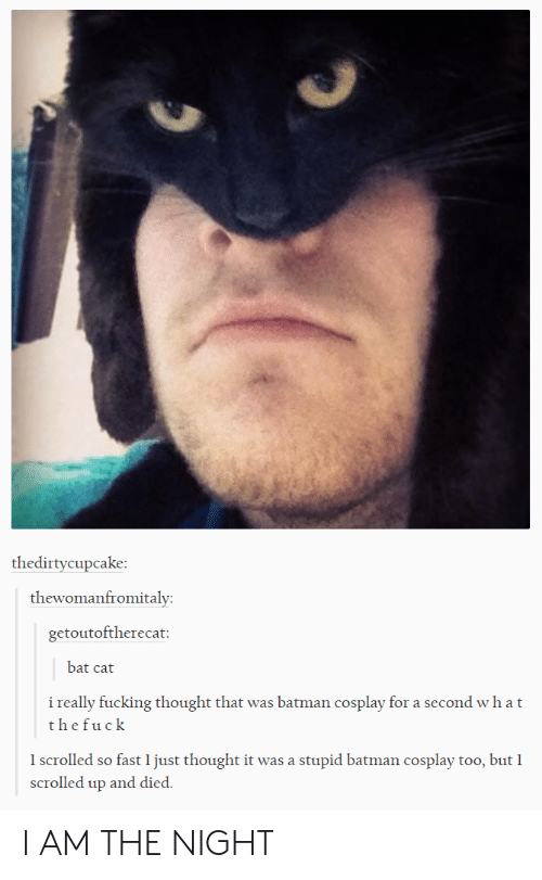 I Am The Night: thedirtycupcake  thewomanfromitaly  getoutoftherecat  bat cat  i really fucking thought that was batman cosplay for a second wh a t  thefuck  I scrolled so fast 1 just thought it was a stupid batman cosplay too, but I  scrolled up and died. I AM THE NIGHT