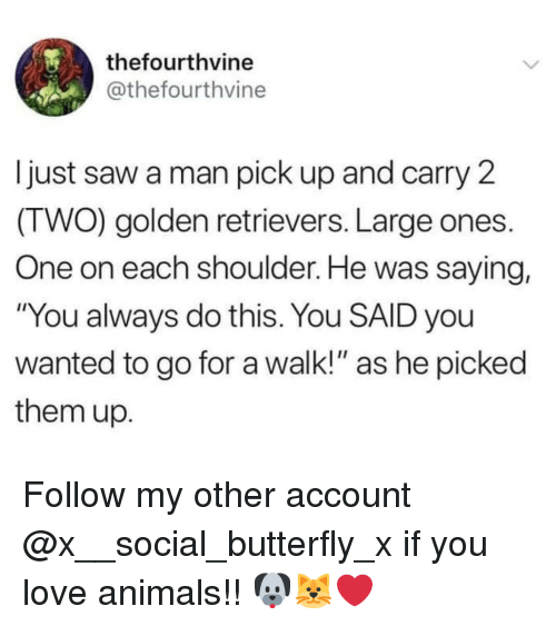 """Animals, Love, and Memes: thefourthvine  @thefourthvine  Ijust saw a man pick up and carry 2  (TWO) golden retrievers. Large ones.  One on each shoulder. He was saying,  """"You always do this. You SAID you  wanted to go for a walk!"""" as he picked  them up. Follow my other account @x__social_butterfly_x if you love animals!! 🐶🐱❤"""