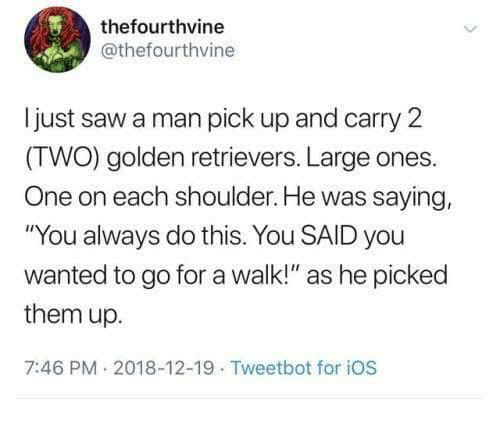 """Dank, Saw, and 🤖: thefourthvine  @thefourthvine  ljust saw a man pick up and carry 2  (TWO) golden retrievers. Large ones.  One on each shoulder. He was saying,  """"You always do this. You SAID you  wanted to go for a walk!"""" as he picked  them up.  7:46 PM 2018-12-19 Tweetbot for iOS"""
