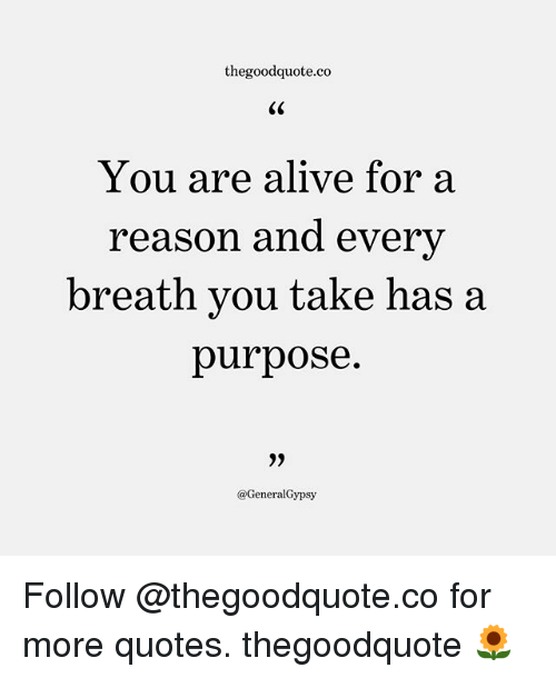Takeing: thegoodquote.co  CS  You are alive for a  reason and every  breath you take has a  purpose.  @GeneralGypsy Follow @thegoodquote.co for more quotes. thegoodquote 🌻