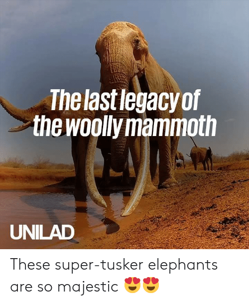 🅱️ 25+ Best Memes About Woolly Mammoth | Woolly Mammoth Memes