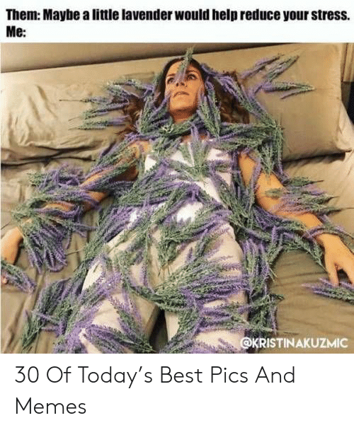 Memes, Best, and Help: Them: Maybe a little lavender would help reduce your stress.  Me:  KRISTINAKUZMIC 30 Of Today's Best Pics And Memes