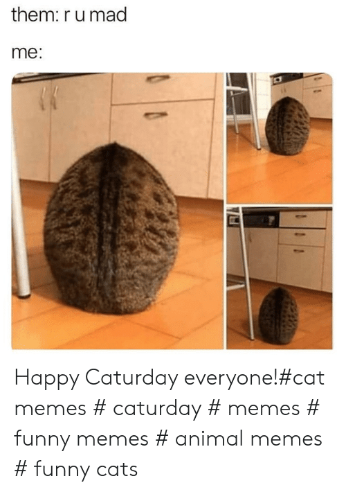 funny cats: them: r u mad  me Happy Caturday everyone!#cat memes # caturday # memes # funny memes # animal memes # funny cats
