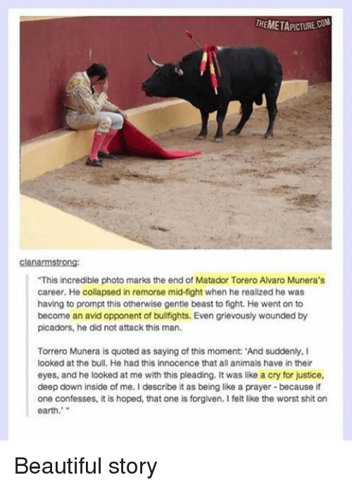 """the bulls: THEMETAPICTURECON  clanarmstrong:  """"This incredible photo marks the end of Matador Torero Alvaro Munera's  career. He collapsed in remorse mid-tight when he realized he was  having to prompt this otherwise gentle beast to fight. He went on to  become an avid opponent of bullfights. Even grievously wounded by  picadors, he did not attack this man.  Torrero Munera is quoted as saying of this moment: 'And suddenly, I  looked at the bull. He had this innocence that all animals have in their  eyes, and he looked at me with this pleading. It was like a cry for justice,  deep down inside of me. Idescribe it as being like a prayer because if  one confesses, it is hoped, that one is forgiven. I felt like the worst shit on  earth.' Beautiful story"""
