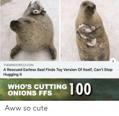 hugging: THEMINDCIRCLE.COM  A Rescued Earless Seal Finds Toy Version Of Itself, Can't Stop  Hugging It  WHO'S CUTTING  ONIONS FFS  00 Aww so cute
