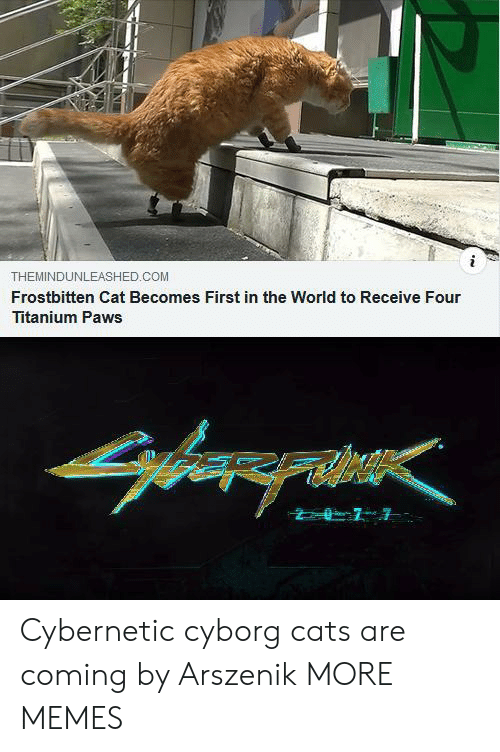 Paws: THEMINDUNLEASHED.COM  Frostbitten Cat Becomes First in the World to Receive Four  Titanium Paws Cybernetic cyborg cats are coming by Arszenik MORE MEMES
