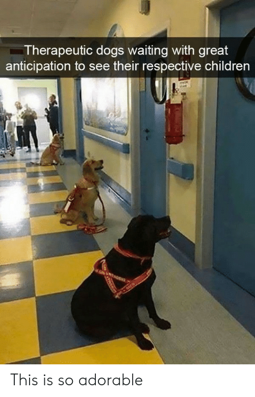 So Adorable: Therapeutic dogs waiting with great  anticipation to see their respective children This is so adorable