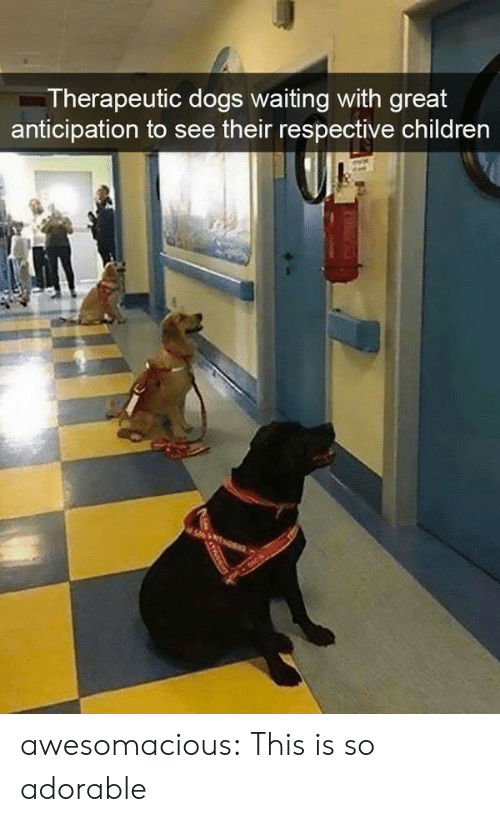 So Adorable: Therapeutic dogs waiting with great  anticipation to see their respective children awesomacious:  This is so adorable