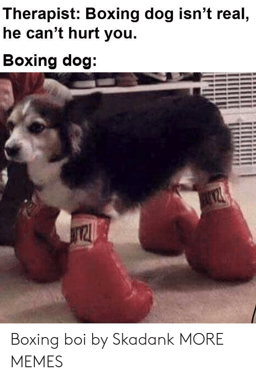 Boxing: Therapist: Boxing dog isn't real  he can't hurt you.  Boxing dog Boxing boi by Skadank MORE MEMES