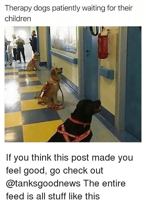 Patiently Waiting: Therapy dogs patiently waiting for their  children If you think this post made you feel good, go check out @tanksgoodnews The entire feed is all stuff like this