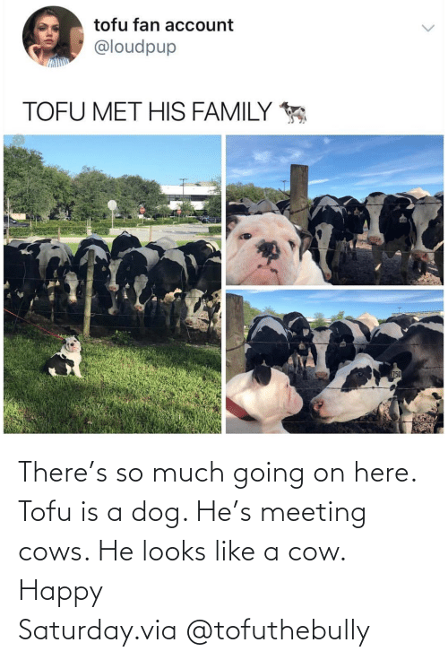 Looks Like: There's so much going on here. Tofu is a dog. He's meeting cows. He looks like a cow. Happy Saturday.via @tofuthebully
