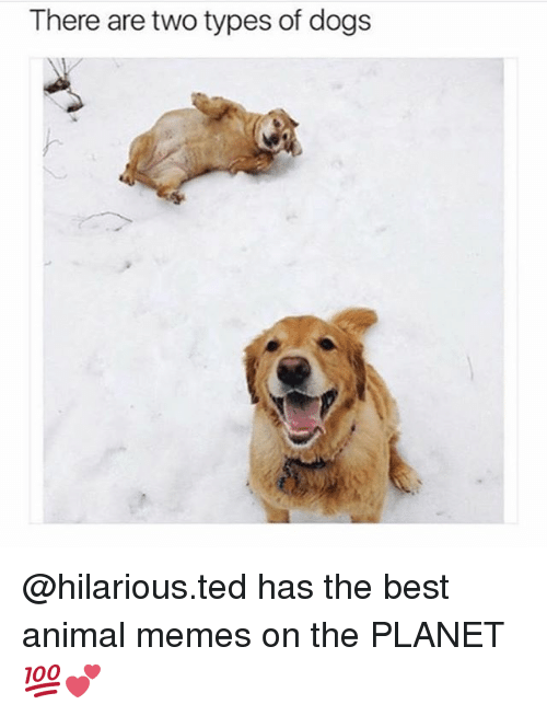 Dogs, Memes, and Ted: There are two types of dogs @hilarious.ted has the best animal memes on the PLANET 💯💕