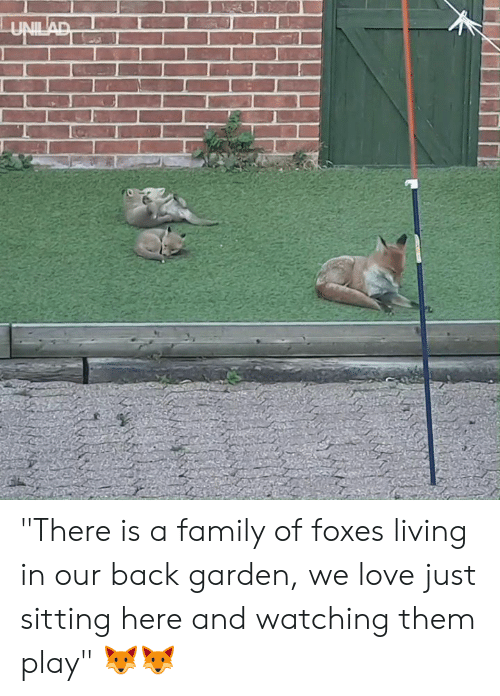 """Dank, Family, and Love: """"There is a family of foxes living in our back garden, we love just sitting here and watching them play"""" 🦊🦊"""