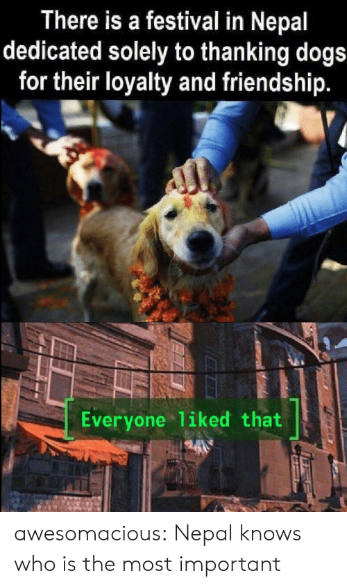 Dogs, Tumblr, and Blog: There is a festival in Nepal  dedicated solely to thanking dogs  for their loyalty and friendship.  Everyone 1iked that awesomacious:  Nepal knows who is the most important