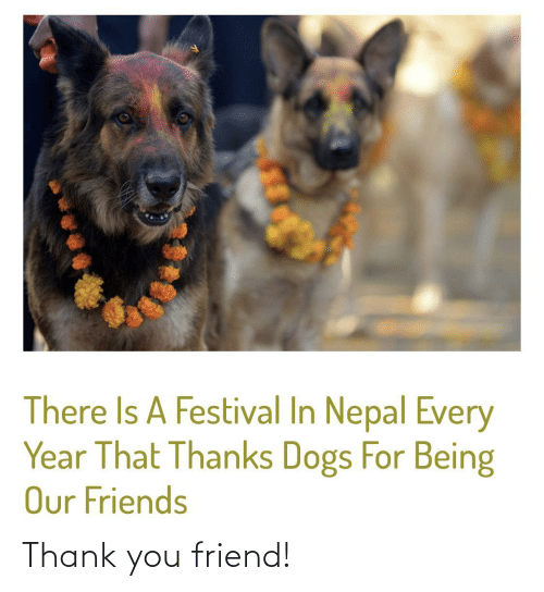 Thank You: There Is A Festival In Nepal Every  Year That Thanks Dogs For Being  Our Friends Thank you friend!