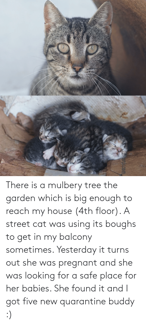 Floor: There is a mulbery tree the garden which is big enough to reach my house (4th floor). A street cat was using its boughs to get in my balcony sometimes. Yesterday it turns out she was pregnant and she was looking for a safe place for her babies. She found it and I got five new quarantine buddy :)