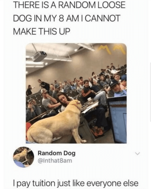 Dog, Random, and Make: THERE IS A RANDOM LOOSE  DOG IN MY 8 AM ICANNOT  MAKE THIS UP  Random Dog  @Inthat8am  I pay tuition just like everyone else