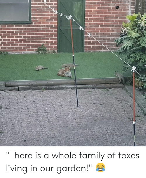 """Family, Living, and Foxes: """"There is a whole family of foxes living in our garden!"""" 😂"""