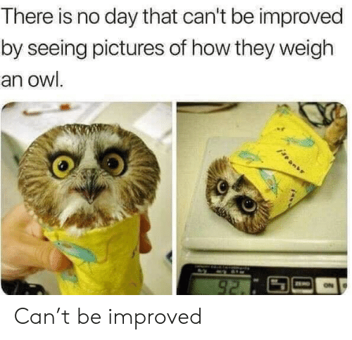 Improved: There is no day that can't be improved  by seeing pictures of how they weigh  an owl.  92. Can't be improved