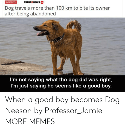 Im Not Saying: THEREISNEWws  INCIDENTS  Dog travels more than 100 km to bite its owner  after being abandoned  I'm not saying what the dog did was right,  I'm just saying he seems like a good boy. When a good boy becomes Dog Neeson by Professor_Jamie MORE MEMES