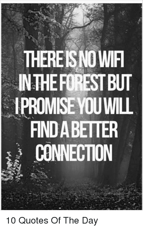 Quotes, The Forest, and Forest: THEREISNO WIF  IN THE FOREST BUT  IPROMISE YOU WILL  FIND A BETTER  CONNECTION 10 Quotes Of The Day