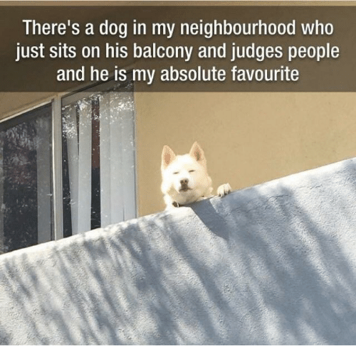 Dank, 🤖, and Dog: There's a dog in my neighbourhood who  just sits on his balcony and judges people  and he is my absolute favourite