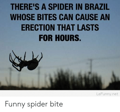 Funny, Spider, and Brazil: THERE'S A SPIDER IN BRAZIL  WHOSE BITES CAN CAUSE AN  ERECTION THAT LASTS  FOR HOURS.  LeFunny.net Funny spider bite