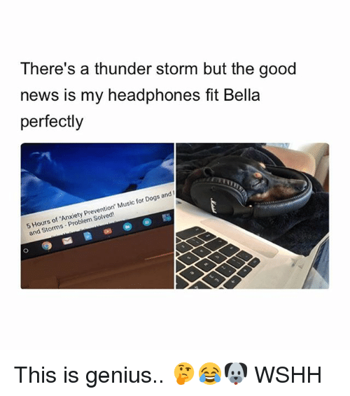 Geniusism: There's a thunder storm but the good  news is my headphones fit Bella  perfectly  5 Hours of Anxiety Prevention. Music for Dogs and I  and Storms Problem Solved This is genius.. 🤔😂🐶 WSHH