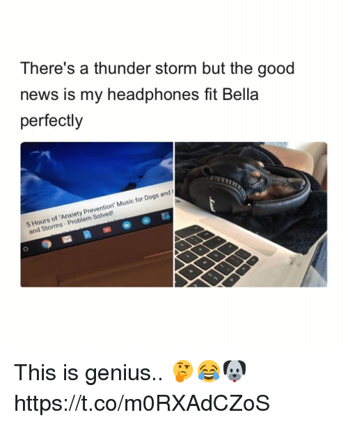 "Geniusism: There's a thunder storm but the good  news is my headphones fit Bella  perfectly  Hours of 'Anxiety Prevention"" Music for Dogs and  and Storms Problem Solved! This is genius.. 🤔😂🐶 https://t.co/m0RXAdCZoS"