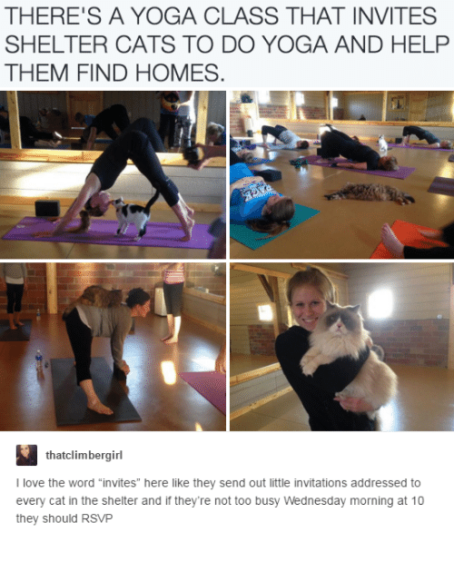 "invitations: THERE'S A YOGA CLASS THAT INVITES  SHELTER CATS TO DO YOGA AND HELP  THEM FIND HOMES  thatclimbergirl  I love the word ""invites"" here like they send out little invitations addressed to  every cat in the shelter and if they're not too busy Wednesday morning at 10  they should RSVP"