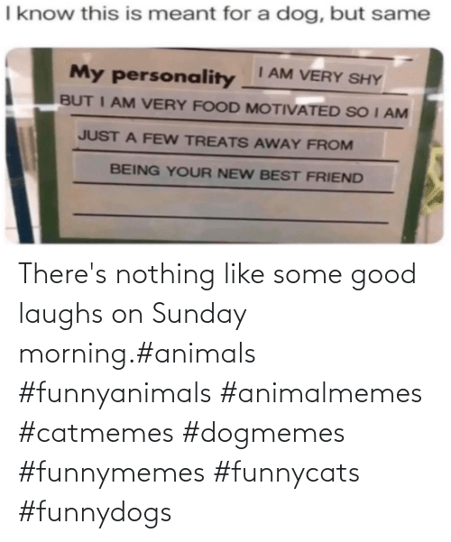 Some Good: There's nothing like some good laughs on Sunday morning.#animals #funnyanimals #animalmemes #catmemes #dogmemes #funnymemes #funnycats #funnydogs