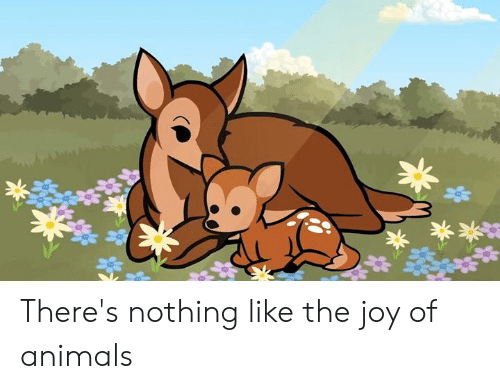 Animals, Dank, and 🤖: There's nothing like the joy of animals