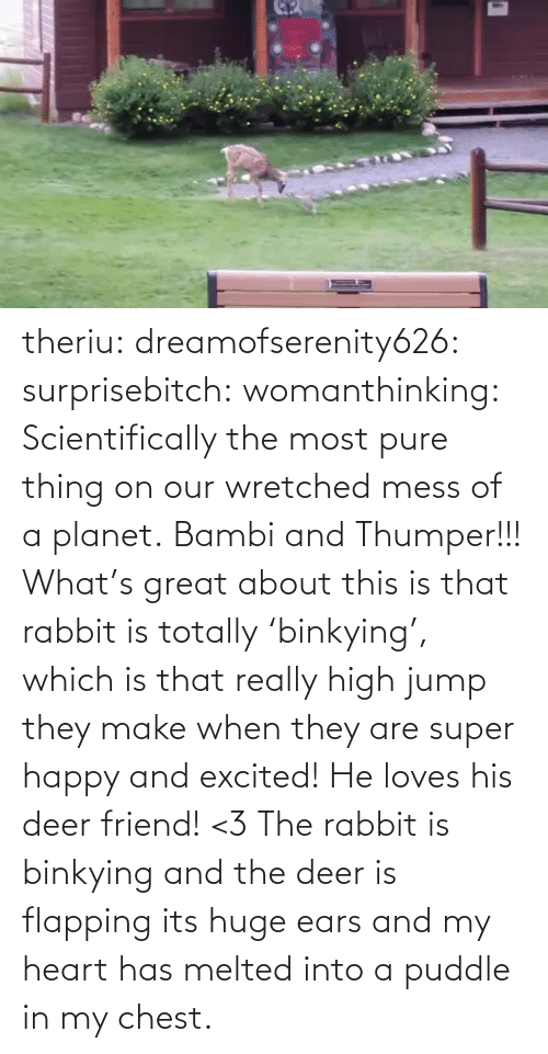 planet: theriu: dreamofserenity626:  surprisebitch:  womanthinking:  Scientifically the most pure thing on our wretched mess of a planet.  Bambi and Thumper!!!  What's great about this is that rabbit is totally 'binkying', which is that really high jump they make when they are super happy and excited! He loves his deer friend! <3  The rabbit is binkying and the deer is flapping its huge ears and my heart has melted into a puddle in my chest.