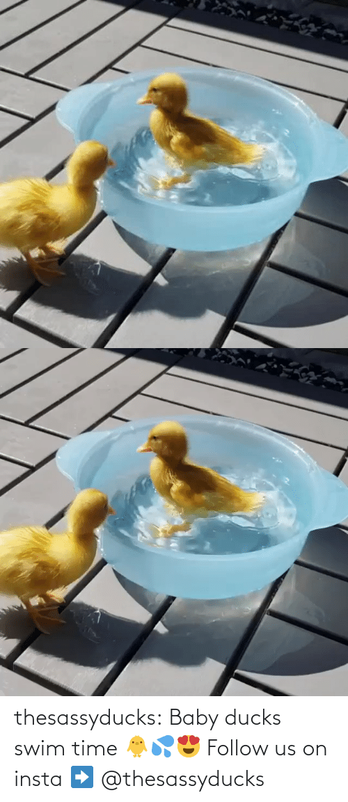Baby: thesassyducks:  Baby ducks swim time 🐥💦😍 Follow us on insta ➡️ @thesassyducks