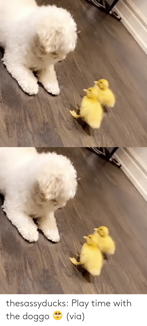 play: thesassyducks:  Play time with the doggo 🥺 (via)