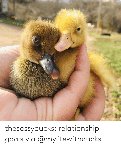 Target: thesassyducks: relationship goals via @mylifewithducks
