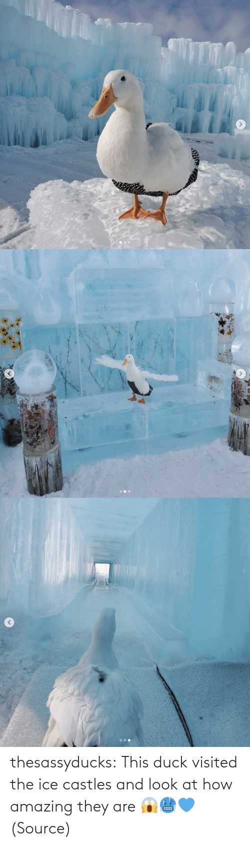 look: thesassyducks: This duck visited the ice castles and look at how amazing they are 😱🥶💙 (Source)